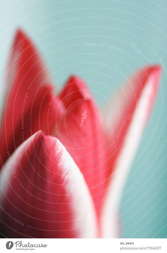Tulipa Lifestyle elegant Wellness Leben harmonisch Sinnesorgane ruhig Dekoration & Verzierung Feste & Feiern Muttertag Ostern Umwelt Natur Pflanze Frühling