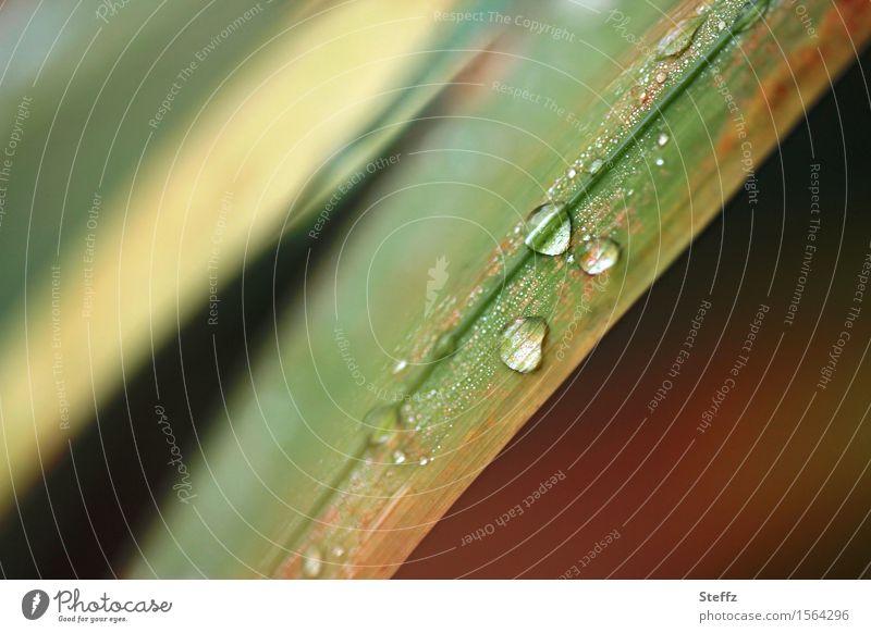 vom Gras und Regen Natur Pflanze Wasser Wassertropfen Herbst Wildpflanze Halm Garten Park nass natürlich schön braun grün Tropfen Herbstbeginn braun-grün