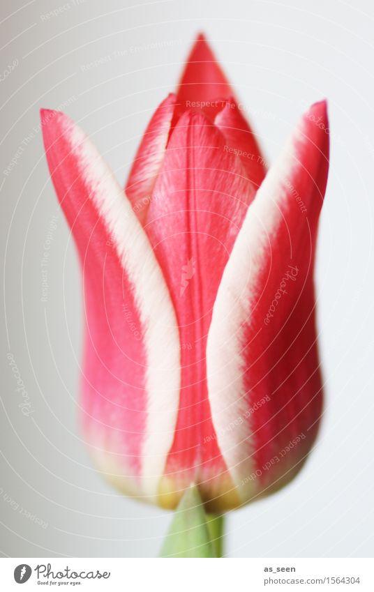 Attitude Natur Pflanze grün Sommer Farbe weiß Blume rot Blatt Umwelt Leben Blüte Frühling Stil Garten rosa