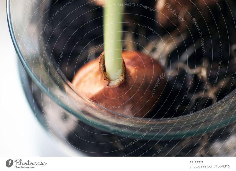 Wachstum Wellness harmonisch Garten Dekoration & Verzierung Ostern Umwelt Natur Pflanze Frühling Klima Blume Topfpflanze Stengel Wurzel Knollengewächse