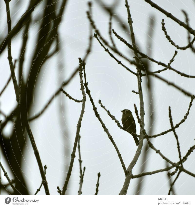 Mini Baum Sträucher Vogel klein trist grau winzig Wicht Zwerg Ast Zweig Geäst trüb Farbfoto Gedeckte Farben Tag Dämmerung