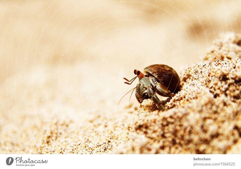 billich | mietfrei Ferien & Urlaub & Reisen Tourismus Ausflug Abenteuer Ferne Freiheit Natur Tier Sand Schönes Wetter Strand Meer Pazifik Costa Rica Wildtier