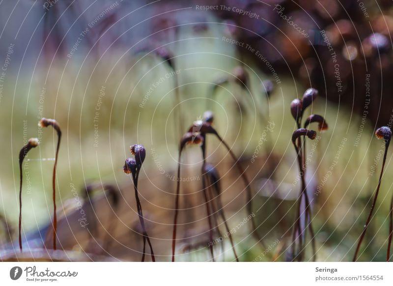 Moosblütentanz Natur Pflanze Tier Frühling Park Wald Bewegung Blühend Tanzen Moosteppich Farbfoto mehrfarbig Außenaufnahme Nahaufnahme Detailaufnahme