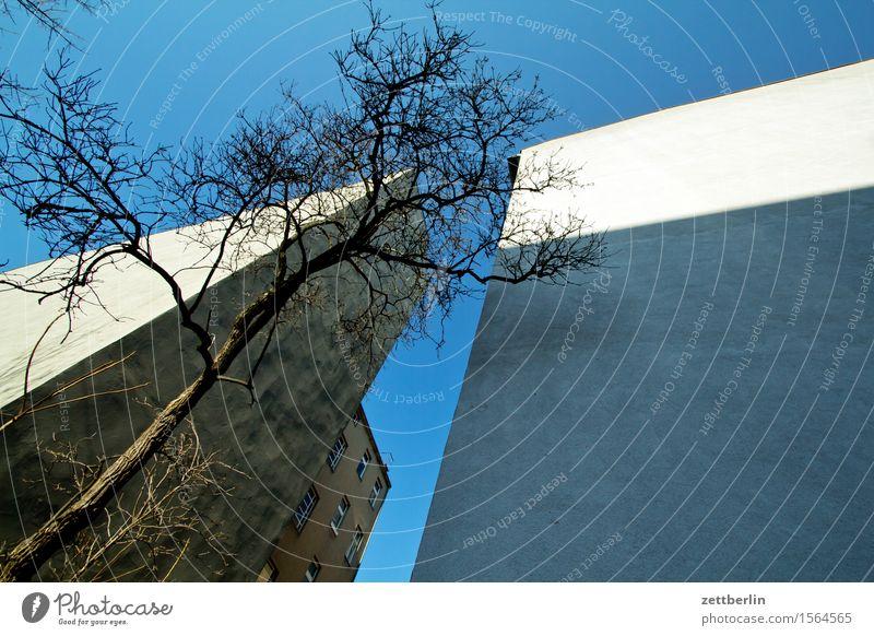 Haus, Baum, Haus, Himmel Stadt Wand Berlin Mauer Stadtleben Häusliches Leben Textfreiraum Ast Baumstamm Zweig Wohnhaus Wolkenloser Himmel Wohnhochhaus