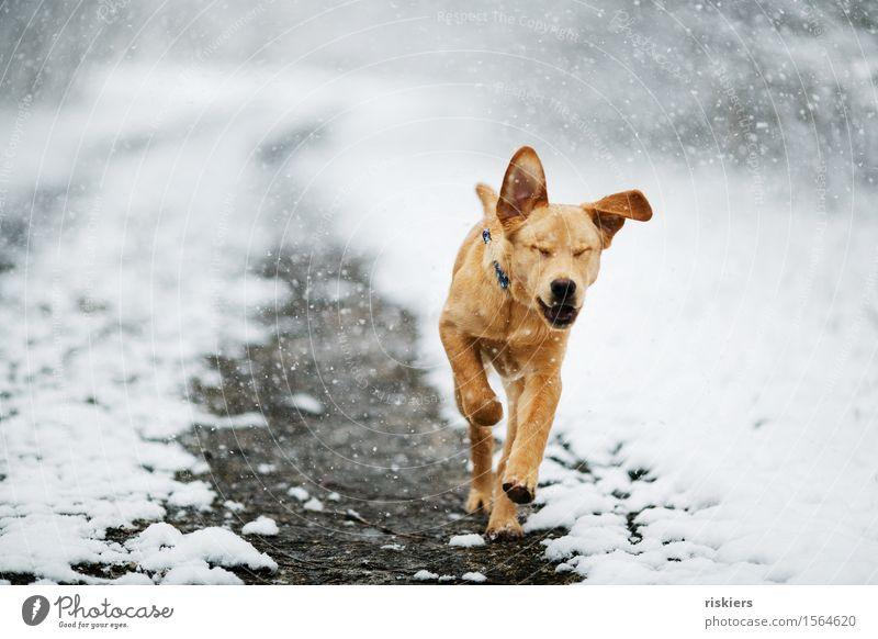 yehaaa Hund Natur Tier Freude Winter Wald Tierjunges Umwelt Bewegung natürlich Schnee Gesundheit Glück Schneefall Park Wetter