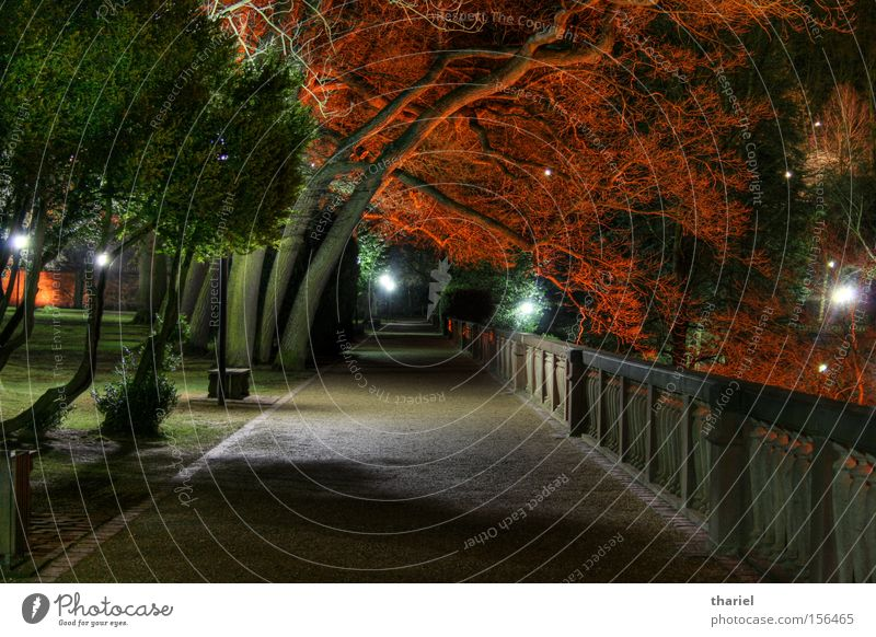 Red Trees Baum rot Wege & Pfade Park Burg oder Schloss Nacht Baden-Württemberg Heidelberg