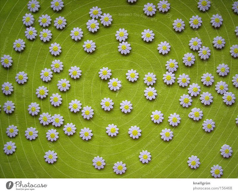 Springtime Blume Blüte Frühling grün Blumenwiese frisch Gänseblümchen weiß Blühend Streublümchen