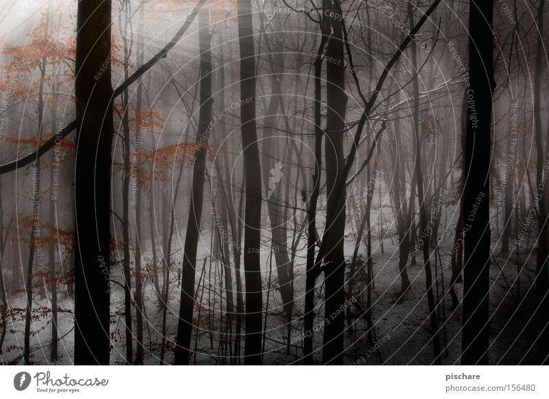im tiiiiefen wald... pt.1 Winter Schnee Nebel Baum Wald dunkel gruselig Waldlichtung Beleuchtung tief Europa pischare spukhaft Licht Schatten Sonnenstrahlen