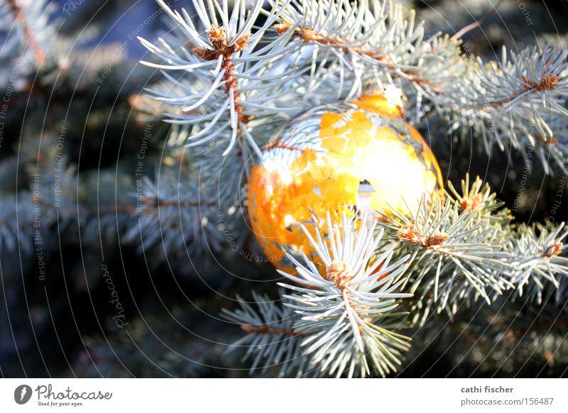 Kitsch Natur alt Weihnachten & Advent grün Winter gelb Dekoration & Verzierung Schönes Wetter kaputt Kitsch Spiegel Kugel Weihnachtsbaum Tanne silber Silber