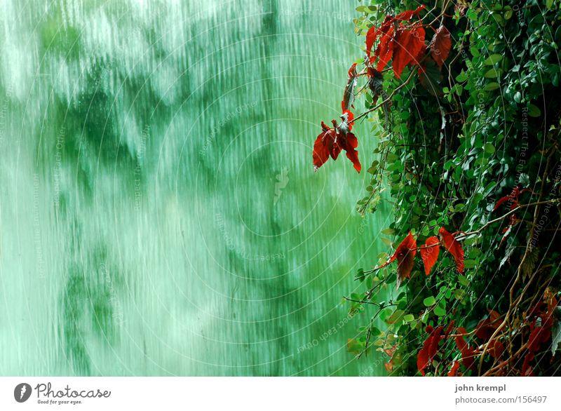 green is the colour grün Efeu rot Blatt Pflanze Wasserfall Brunnen Urwald Regen Asien Garten Park