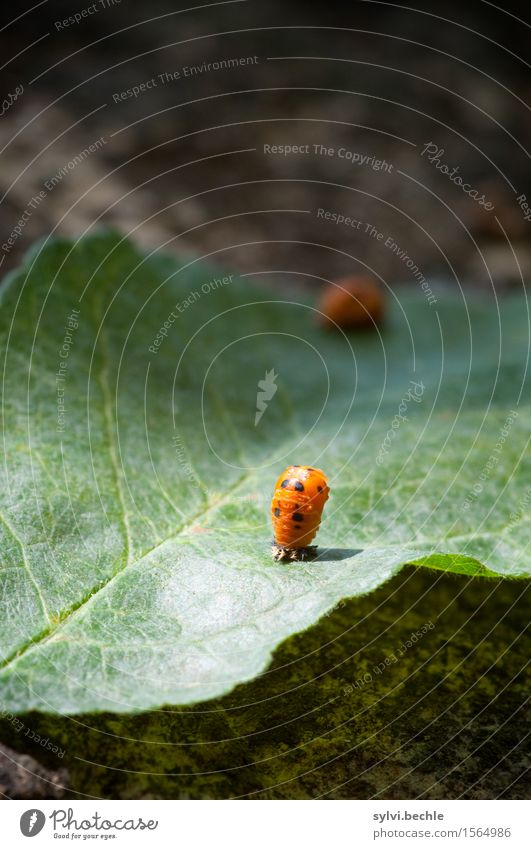 Metamorphose Umwelt Natur Pflanze Tier Frühling Blatt Garten Wildtier Tierjunges Bewegung festhalten Wachstum grün orange geduldig Leben Beginn geheimnisvoll