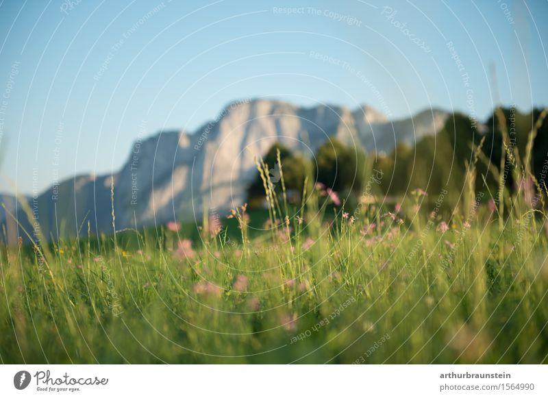 Blumenwiese vor Bergpanorama Freizeit & Hobby Ferien & Urlaub & Reisen Tourismus Ausflug Sommer Sommerurlaub Berge u. Gebirge wandern Umwelt Natur Landschaft