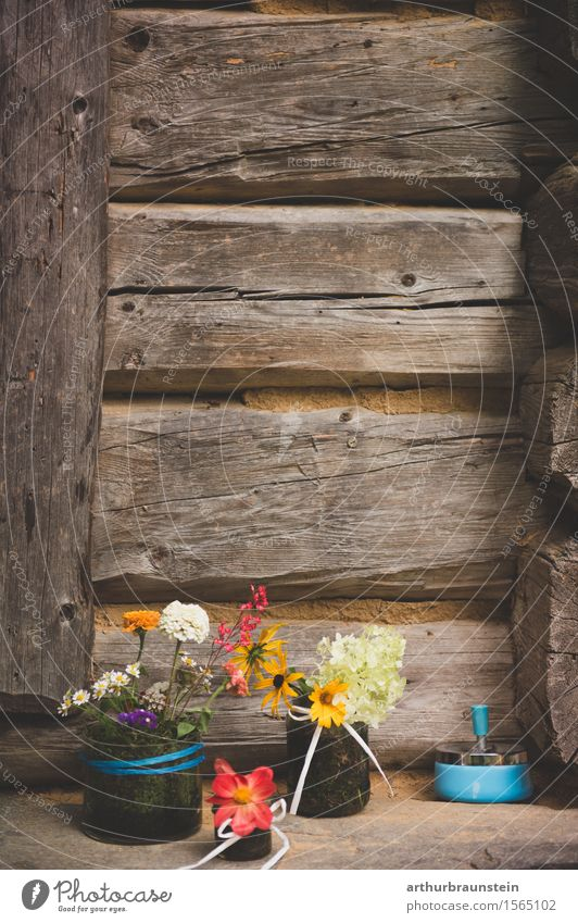 Dekoration vor Holzwand Lifestyle Stil Freizeit & Hobby Basteln Haus Garten Dekoration & Verzierung Hütte Natur Sonnenlicht Frühling Sommer Pflanze Blume Blüte