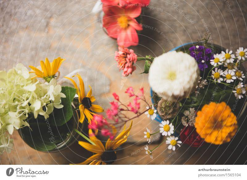 Blumen im Glas Stil Dekoration & Verzierung Natur Frühling Sommer Pflanze Blüte Grünpflanze Topfpflanze Gänseblümchen Wiesenblume Blumenstrauß stehen schön