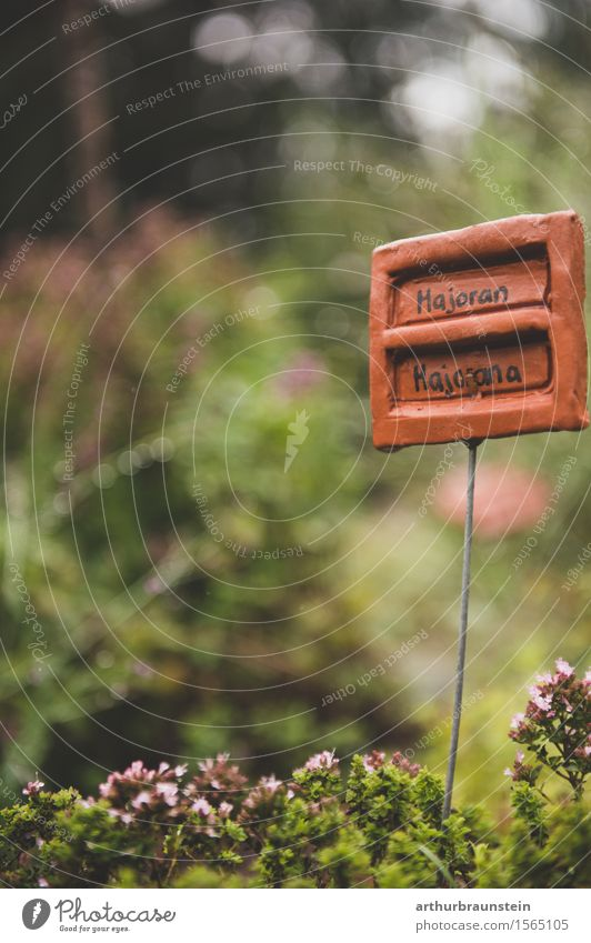 Kräuter im Garten Natur Pflanze grün Sommer Gesunde Ernährung Wald Umwelt Blüte Frühling Lebensmittel Wachstum frisch Schilder & Markierungen Schriftzeichen