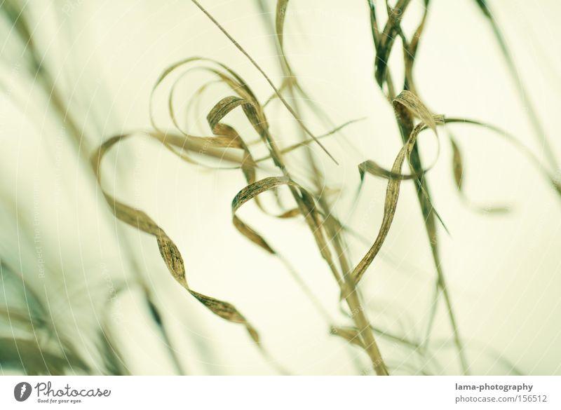 filigran Natur Blatt Gras Wind Schilfrohr Seeufer Halm Flussufer fein Spirale