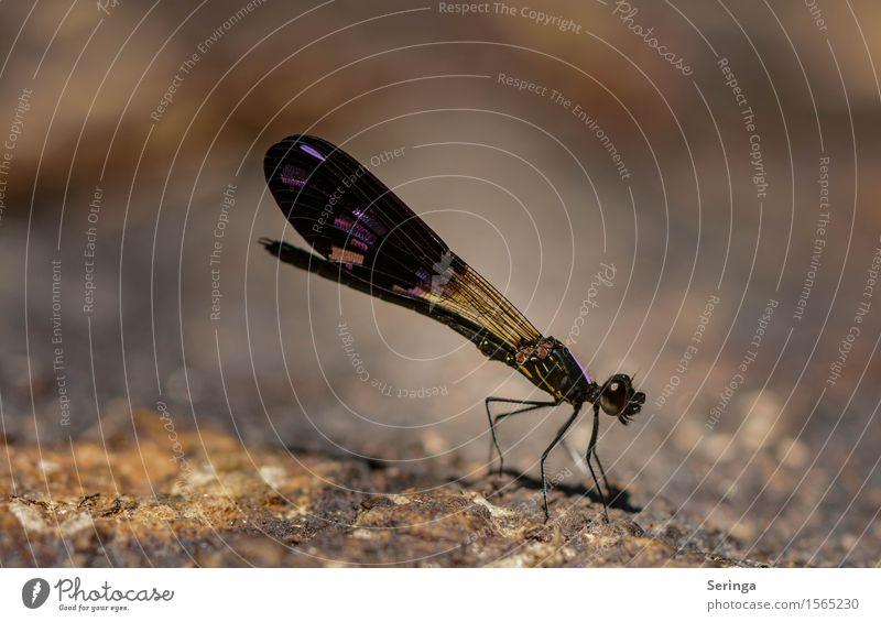 Und noch ne Libelle Natur Pflanze Tier Park Wiese Urwald Hügel Felsen Küste Seeufer Flussufer Strand Bucht Wildtier Fliege Tiergesicht Flügel Libellenflügel 1