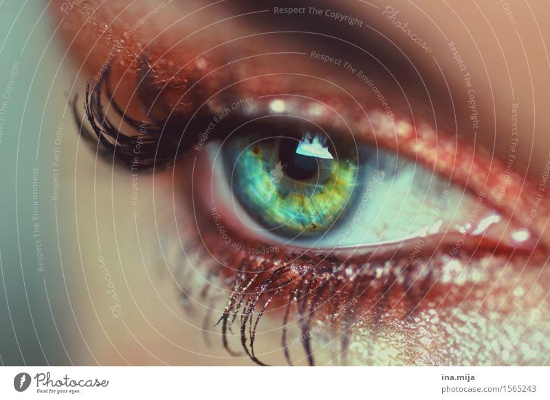 im Auge behalten Mensch Frau Jugendliche schön Junge Frau 18-30 Jahre Gesicht Erwachsene Leben feminin beobachten Körperpflege Kosmetik Momentaufnahme Schminke
