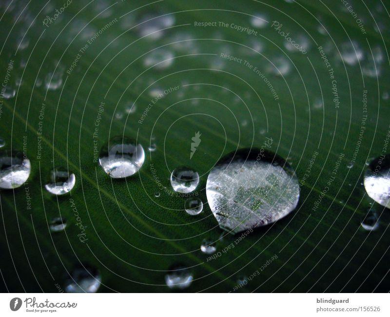 555 Waterdrops Wasser grün Blatt Leben Regen glänzend Wassertropfen nass frisch Makroaufnahme Tropfen Tränen