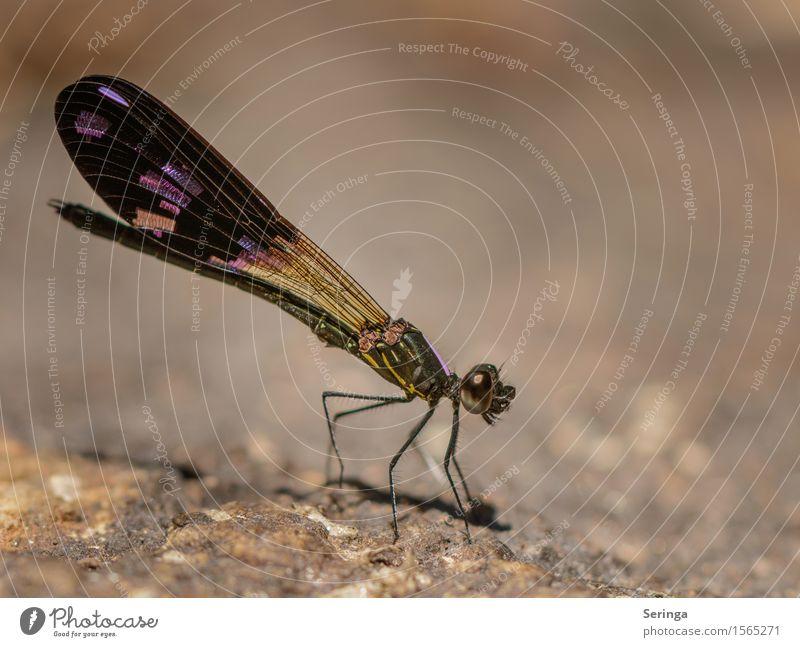 Im Licht Umwelt Natur Landschaft Pflanze Tier Wiese Feld Wald Urwald Felsen Seeufer Flussufer Ostsee Meer Wildtier Fliege Tiergesicht Flügel Libelle