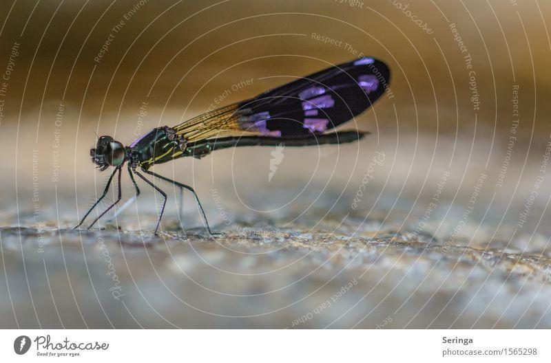 Schönheit Natur Landschaft Schönes Wetter Garten Park Wiese Wald Felsen Küste Seeufer Tier Wildtier Fliege Flügel Libelle Libellenflügel 1 fliegen Farbfoto