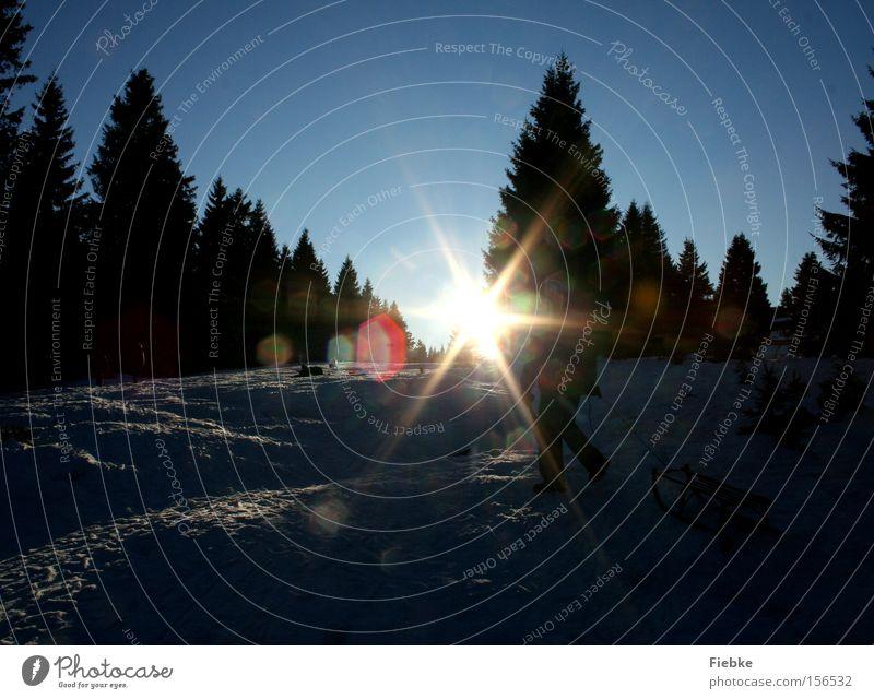 Der Sonne entgegen Winter Schnee Wald Baum Eis Frost Flocke Himmel Harz Rodelbahn Rodeln Schlitten Spuren Tag Freude Natur Sonnenstrahlen Beleuchtung Landschaft