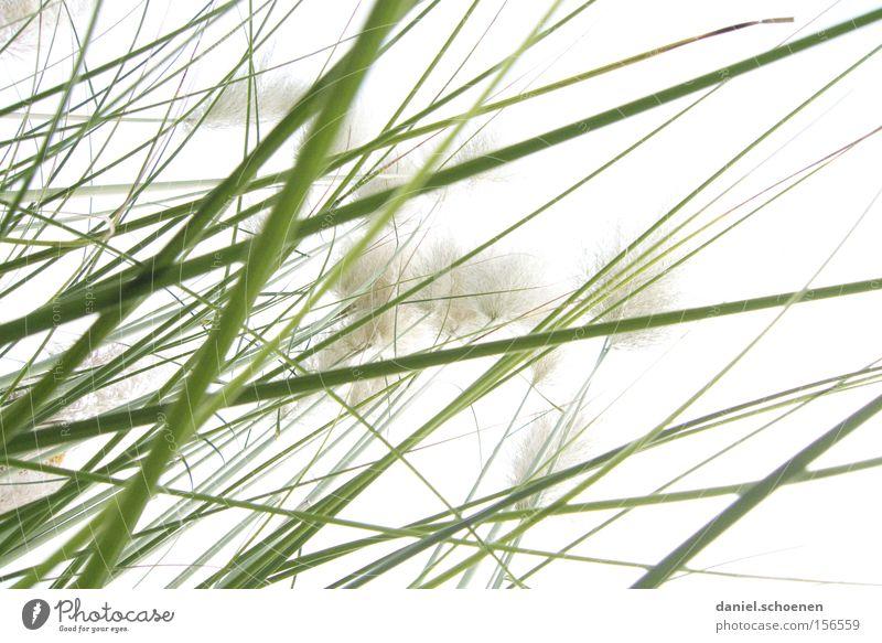 Gras weiß grün abstrakt Frühling hell Hintergrundbild Perspektive