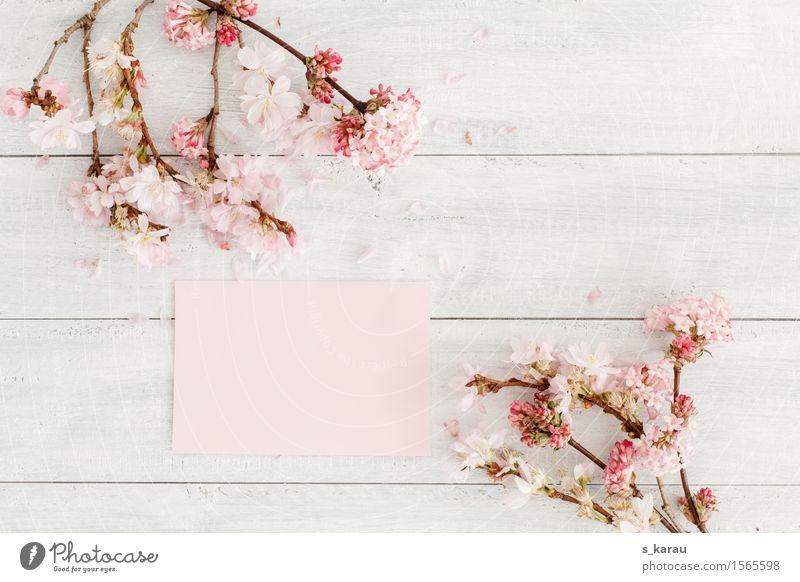 Blumengruss Pflanze Baum Ein Lizenzfreies Stock Foto Von Photocase