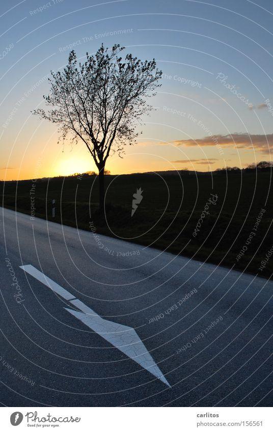 ist gesünder Richtung führen Fahrbahn Straße Lebenslauf Tod Dreiteilung Baum gefährlich Straßenrand Sonnenuntergang Herbst Verkehr Pfeil richtungsweisend