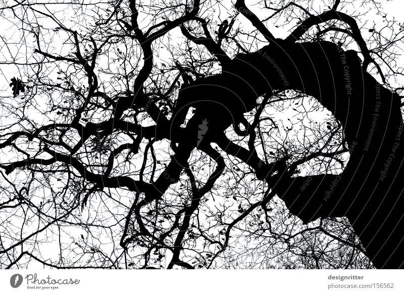 Märchenwald alt Baum gruselig Geister u. Gespenster kahl unheimlich Monster Hexe Eiche Zauberer Verhext