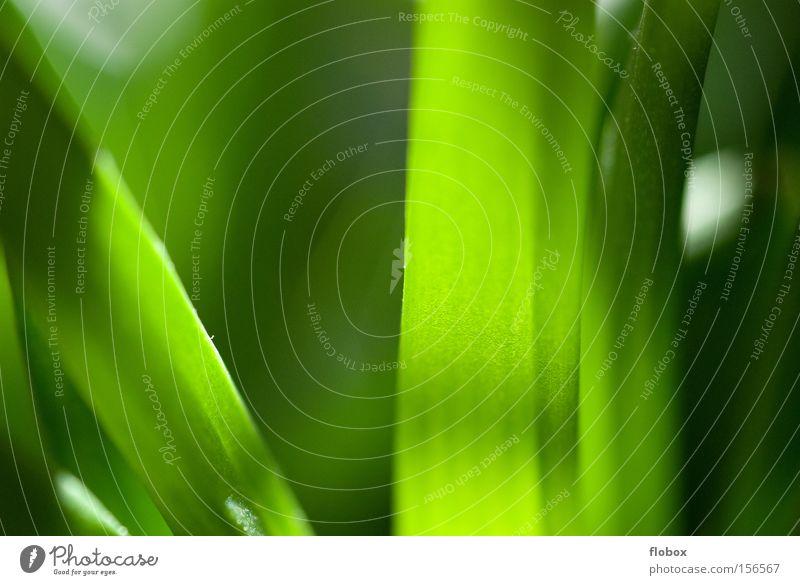Green Arrow Wohnzimmer Natur Pflanze Blume Gras Kaktus Wüste grün Umweltschutz Zimmerpflanze Photosynthese Biologie Makroaufnahme Licht