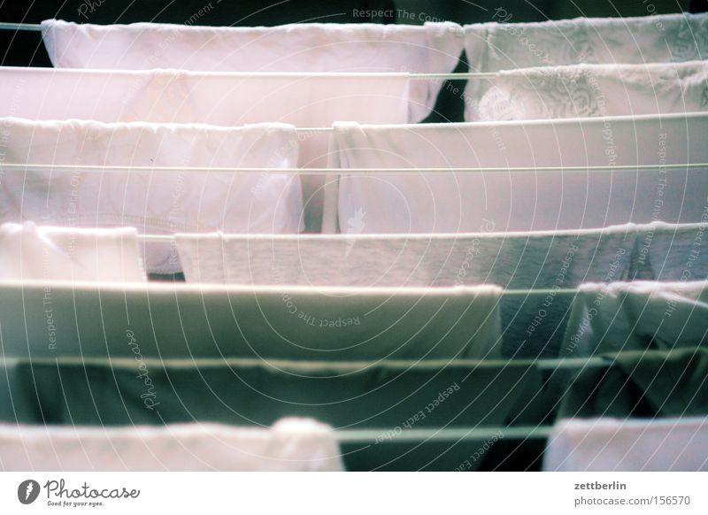 Schlüpper Wäsche Wäscheleine Wäschetrockner Haushalt Waschtag aufhängen Unterwäsche Unterhose Baumwolle Dienstleistungsgewerbe Häusliches Leben Bekleidung
