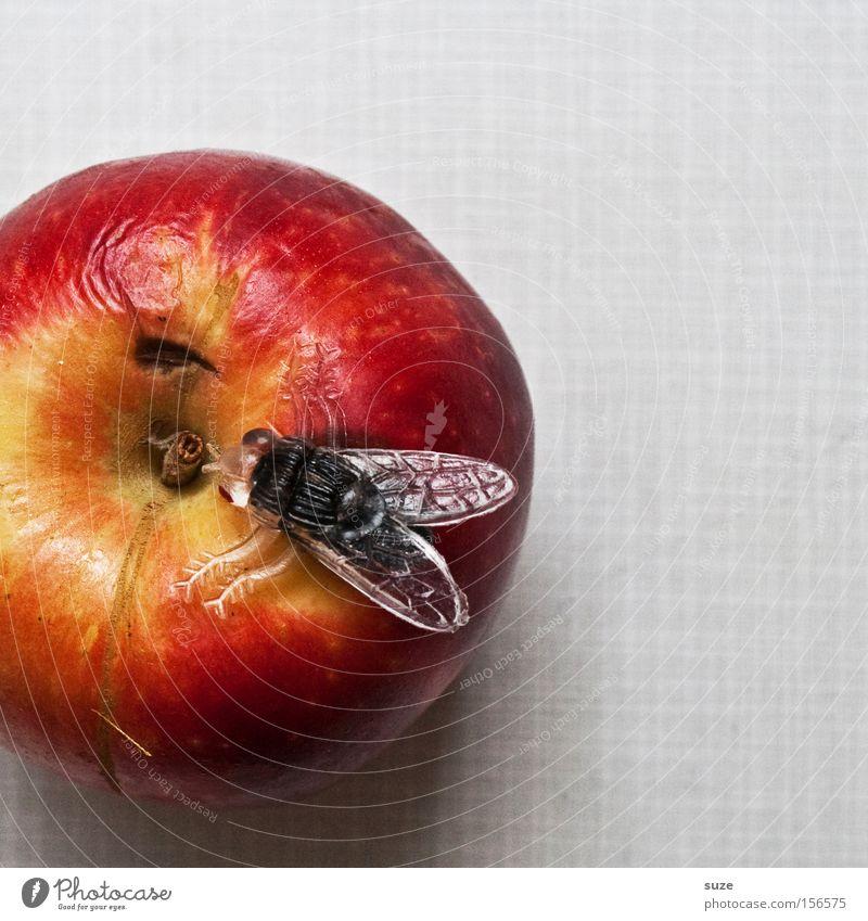 Obstfliege rot lustig Frucht Lebensmittel Freizeit & Hobby Fliege Ernährung Tisch Dekoration & Verzierung süß Kreativität Idee Kunststoff Apfel Insekt lecker