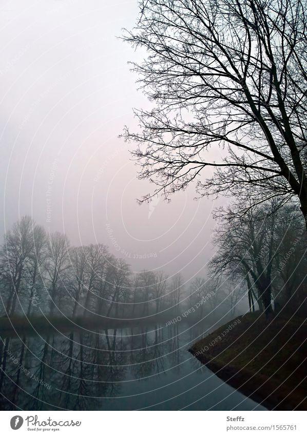 Stille im Nebel Natur Wasser Baum Landschaft ruhig Winter dunkel Traurigkeit Stimmung trist Fluss Flussufer Nachmittag laublos Januar