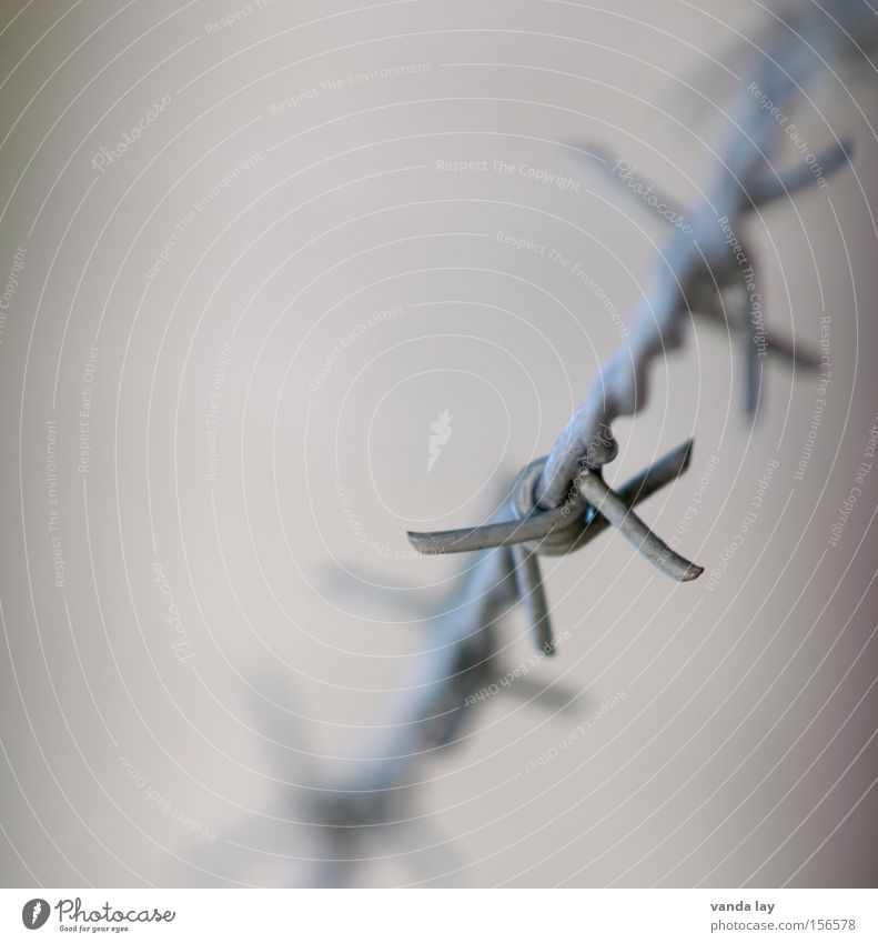 Amnesty Stacheldraht Zaun Krieg Folter Freiheit gefangen Menschenrechte einsperren Justizvollzugsanstalt Haftstrafe bestrafen gefährlich Frieden Zufluchtsort