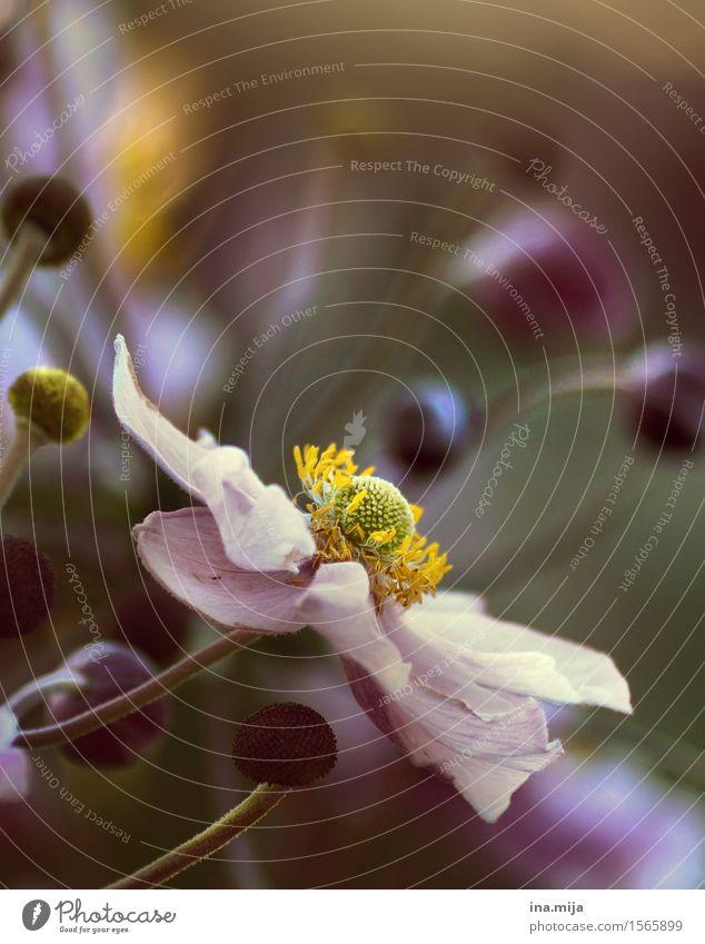 Blütezeit Natur grün Sommer Blume ruhig dunkel Umwelt gelb Traurigkeit Frühling rosa frisch ästhetisch Blühend Hoffnung
