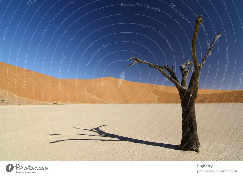Einsamkeit Afrika Wüste Namibia Düne baum Sossous Vlei Dead Vlei Trockenheit Sesriem Weite Dürre Sand Tod Stille Kameldorn