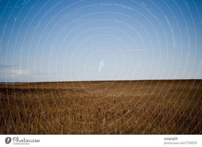 Die Vogelscheuche versteckt sich Himmel blau Wolken gelb Ferne Landschaft braun Feld Küste Seeufer Vorpommersche Boddenlandschaft