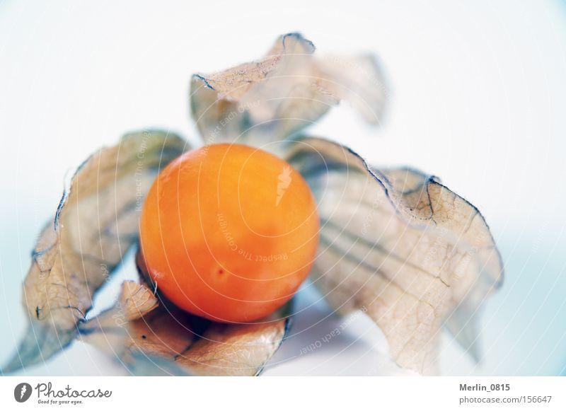 Weiche Hülle - süßer Kern Physalis Frucht Gesundheit Vitamin Urwald tropisch Karibisches Meer klein orange Ernährung Cocktail Dekoration & Verzierung Fruit