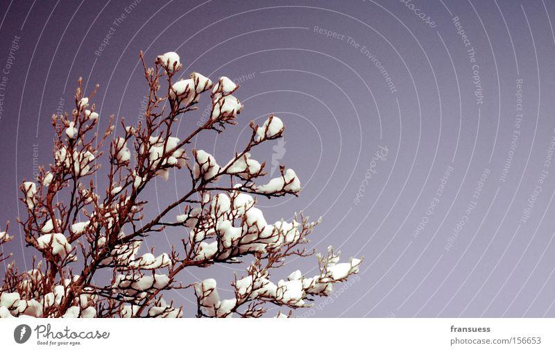 lila Natur schön Baum blau Winter Farbe Schnee Sträucher violett Ast sanft Zweig Filter reduziert