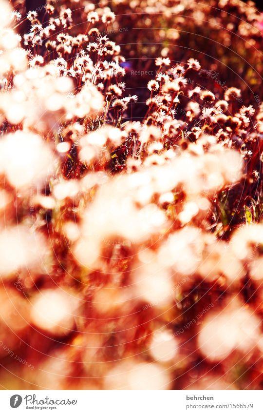 *550* COSTA RICA blümchen Ferien & Urlaub & Reisen Tourismus Ausflug Abenteuer Ferne Freiheit Natur Pflanze Frühling Sommer Schönes Wetter Blume Blüte Garten