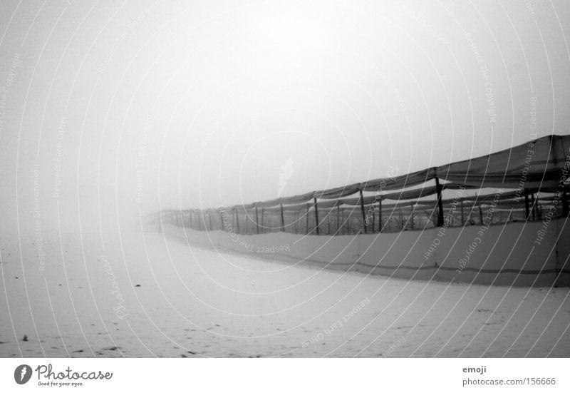 endlos Natur weiß Baum Winter schwarz kalt Schnee Nebel Netz Unendlichkeit lang Landwirtschaft Apfelbaum
