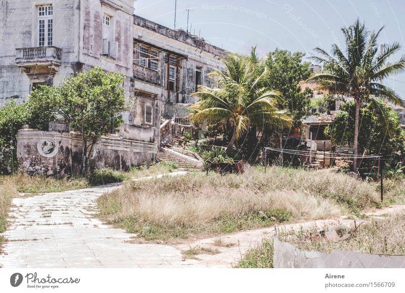 ausgeträumt Palme Havanna Kuba Stadt Menschenleer Haus Traumhaus Ruine Park Gebäude Villa Gutshaus Fassade Garten träumen alt groß heiß hell kaputt grau