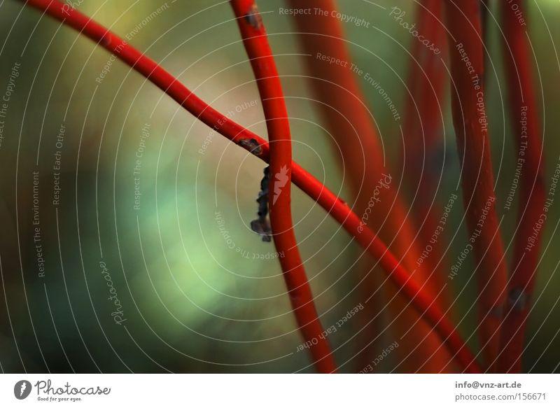 X Natur grün Pflanze rot Herbst Park Sträucher Buchstaben Ast Makroaufnahme kreuzen knallig Lateinisches Alphabet