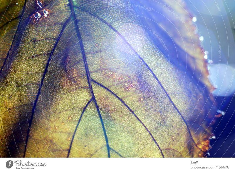hope alt Baum Blatt Herbst Leben Traurigkeit Beleuchtung Zeit Beginn Hoffnung Vergänglichkeit Abschied vertrocknet rückwärts verdeckt Blattadern
