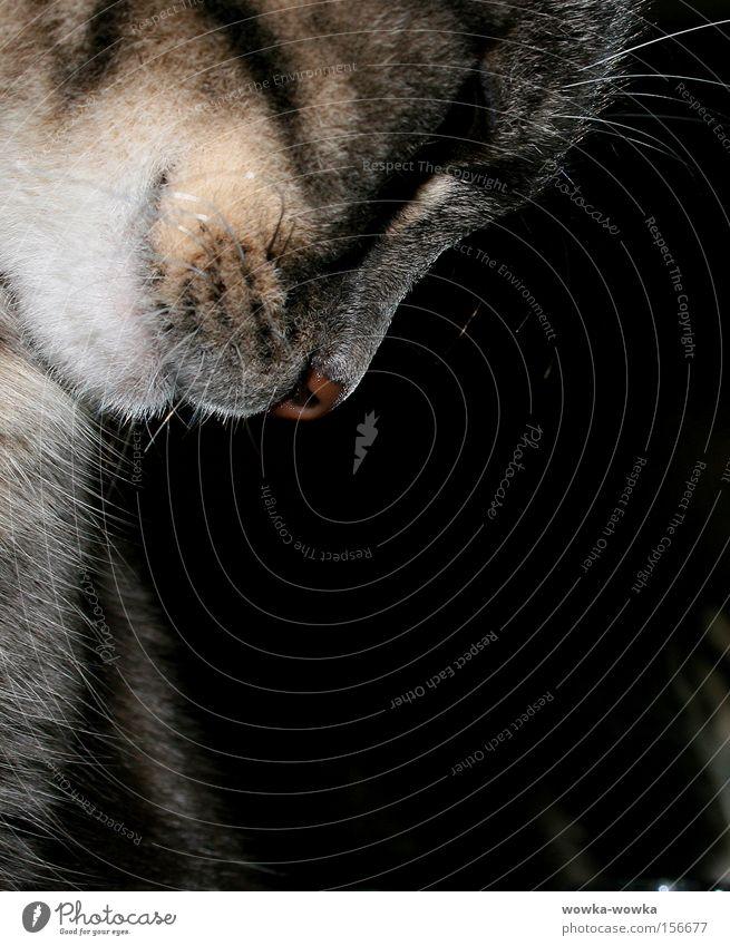 Nachdencklich rot Auge Tier grau Katze Mund Nase