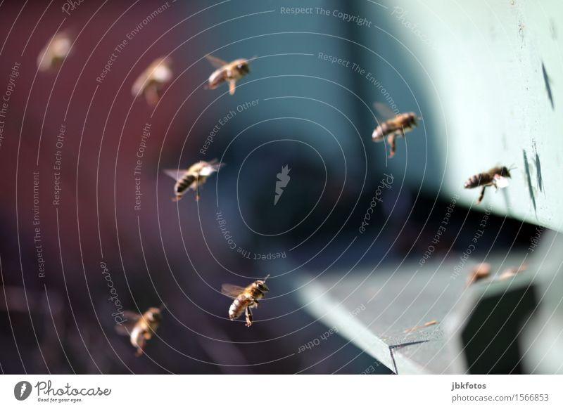 Flugshow Natur grün Tier Umwelt Lebensmittel fliegen Luft Flügel Tiergruppe Schönes Wetter Insekt rennen Biene Haustier Sammlung Tau