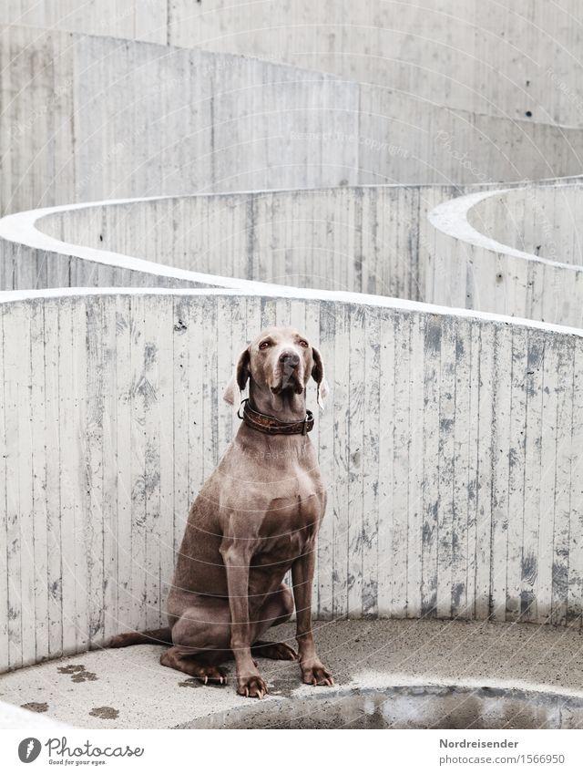 Belebter Beton Baustelle Dorf Bauwerk Architektur Sehenswürdigkeit Tier Haustier Hund Linie beobachten Blick sitzen warten Freundlichkeit Neugier loyal