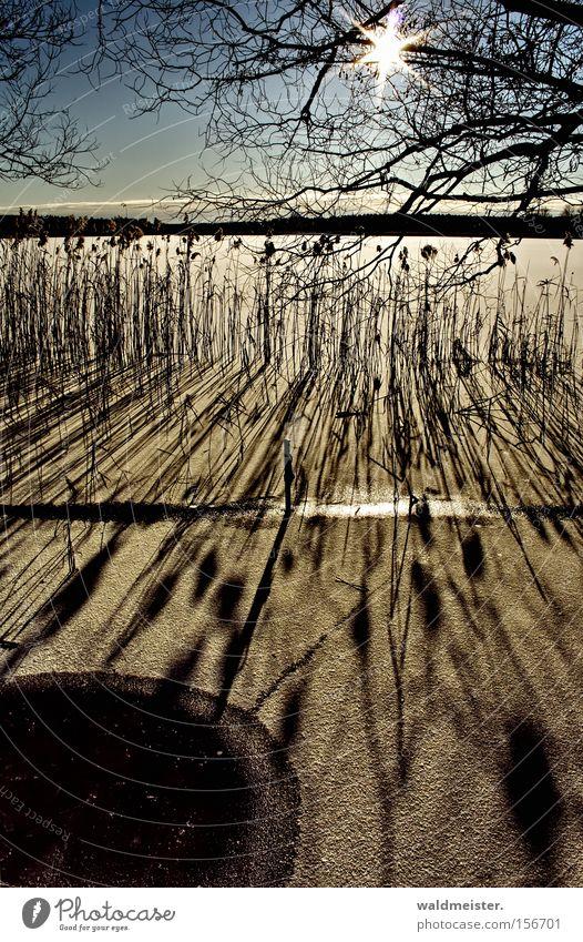Das kleine Eisloch Wasser Himmel Sonne Winter kalt Schnee See Schilfrohr