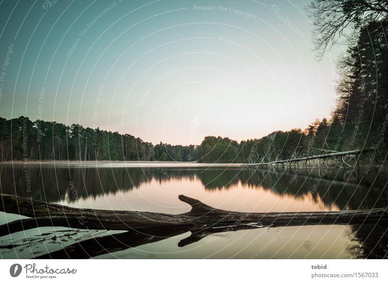 Abendstimmung Natur Landschaft Pflanze Wasser Himmel Wolkenloser Himmel Horizont Schönes Wetter Baum Wald Seeufer Einsamkeit Freiheit Idylle Ferne Baumstamm